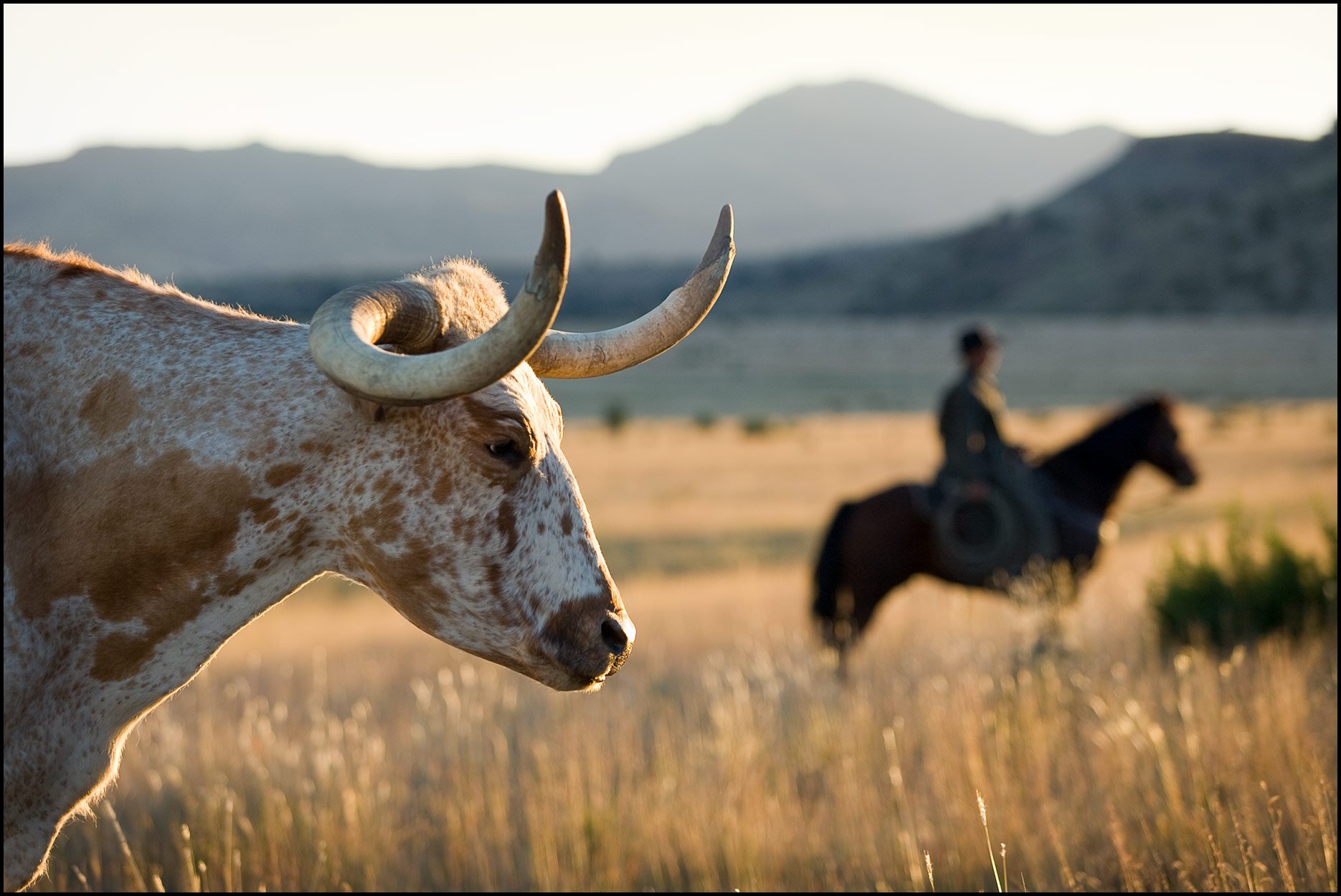 A longhorn steer in the foreground eyes a cowboy on horseback on a ranch in the Davis Mountains of west Texas.